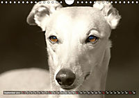 Windhunde eye-catcher (Wandkalender 2019 DIN A4 quer) - Produktdetailbild 9