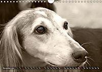 Windhunde eye-catcher (Wandkalender 2019 DIN A4 quer) - Produktdetailbild 11