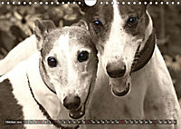 Windhunde eye-catcher (Wandkalender 2019 DIN A4 quer) - Produktdetailbild 10