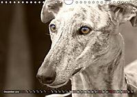 Windhunde eye-catcher (Wandkalender 2019 DIN A4 quer) - Produktdetailbild 12