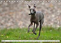Windspiel Schönheiten (Tischkalender 2019 DIN A5 quer) - Produktdetailbild 7