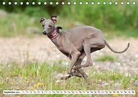 Windspiel Schönheiten (Tischkalender 2019 DIN A5 quer) - Produktdetailbild 9