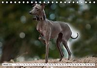 Windspiel Schönheiten (Tischkalender 2019 DIN A5 quer) - Produktdetailbild 10