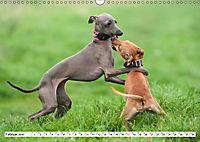 Windspiel Schönheiten (Wandkalender 2019 DIN A3 quer) - Produktdetailbild 2