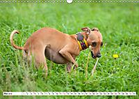 Windspiel Schönheiten (Wandkalender 2019 DIN A3 quer) - Produktdetailbild 5