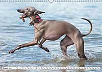 Windspiel Schönheiten (Wandkalender 2019 DIN A3 quer) - Produktdetailbild 8