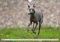 Windspiel Schönheiten (Wandkalender 2019 DIN A4 quer) - Produktdetailbild 5