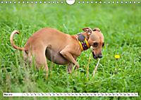 Windspiel Schönheiten (Wandkalender 2019 DIN A4 quer) - Produktdetailbild 9