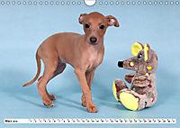 Windspiel Schönheiten (Wandkalender 2019 DIN A4 quer) - Produktdetailbild 7