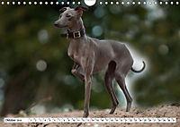 Windspiel Schönheiten (Wandkalender 2019 DIN A4 quer) - Produktdetailbild 6
