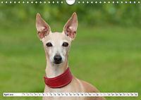 Windspiel Schönheiten (Wandkalender 2019 DIN A4 quer) - Produktdetailbild 12