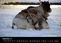Wintertraum Nordnorwegen (Tischkalender 2019 DIN A5 quer) - Produktdetailbild 12