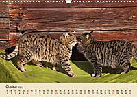 Wir sind die Stars am Bauernhof (Wandkalender 2019 DIN A3 quer) - Produktdetailbild 10