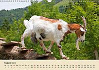 Wir sind die Stars am Bauernhof (Wandkalender 2019 DIN A3 quer) - Produktdetailbild 8