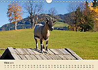 Wir sind die Stars am Bauernhof (Wandkalender 2019 DIN A4 quer) - Produktdetailbild 3