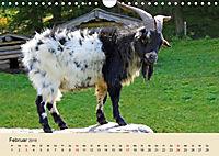 Wir sind die Stars am Bauernhof (Wandkalender 2019 DIN A4 quer) - Produktdetailbild 2