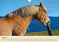Wir sind die Stars am Bauernhof (Wandkalender 2019 DIN A4 quer) - Produktdetailbild 5