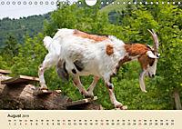 Wir sind die Stars am Bauernhof (Wandkalender 2019 DIN A4 quer) - Produktdetailbild 8