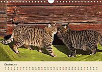 Wir sind die Stars am Bauernhof (Wandkalender 2019 DIN A4 quer) - Produktdetailbild 10