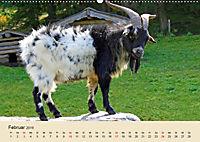 Wir sind die Stars am Bauernhof (Wandkalender 2019 DIN A2 quer) - Produktdetailbild 2