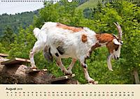 Wir sind die Stars am Bauernhof (Wandkalender 2019 DIN A2 quer) - Produktdetailbild 8