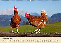 Wir sind die Stars am Bauernhof (Wandkalender 2019 DIN A2 quer) - Produktdetailbild 9