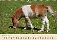 Wir sind die Stars am Bauernhof (Wandkalender 2019 DIN A2 quer) - Produktdetailbild 12