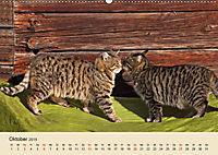 Wir sind die Stars am Bauernhof (Wandkalender 2019 DIN A2 quer) - Produktdetailbild 10