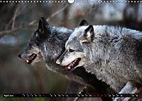 Wölfe, Füchse und Kojoten (Wandkalender 2019 DIN A3 quer) - Produktdetailbild 4