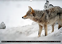 Wölfe, Füchse und Kojoten (Wandkalender 2019 DIN A3 quer) - Produktdetailbild 1
