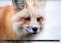 Wölfe, Füchse und Kojoten (Wandkalender 2019 DIN A3 quer) - Produktdetailbild 10