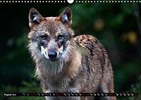 Wölfe, Füchse und Kojoten (Wandkalender 2019 DIN A3 quer) - Produktdetailbild 8