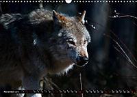 Wölfe, Füchse und Kojoten (Wandkalender 2019 DIN A3 quer) - Produktdetailbild 11