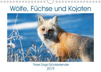 Wölfe, Füchse und Kojoten (Wandkalender 2019 DIN A4 quer), Jana Malin