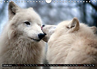 Wölfe, Füchse und Kojoten (Wandkalender 2019 DIN A4 quer) - Produktdetailbild 2