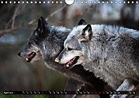Wölfe, Füchse und Kojoten (Wandkalender 2019 DIN A4 quer) - Produktdetailbild 4