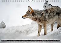Wölfe, Füchse und Kojoten (Wandkalender 2019 DIN A4 quer) - Produktdetailbild 1