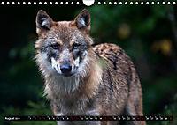 Wölfe, Füchse und Kojoten (Wandkalender 2019 DIN A4 quer) - Produktdetailbild 8