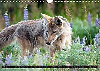 Wölfe, Füchse und Kojoten (Wandkalender 2019 DIN A4 quer) - Produktdetailbild 7