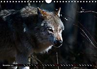 Wölfe, Füchse und Kojoten (Wandkalender 2019 DIN A4 quer) - Produktdetailbild 11
