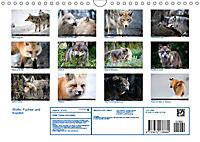 Wölfe, Füchse und Kojoten (Wandkalender 2019 DIN A4 quer) - Produktdetailbild 13