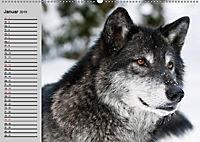 Wölfe. Verwegene Anmut (Wandkalender 2019 DIN A2 quer) - Produktdetailbild 1