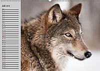 Wölfe. Verwegene Anmut (Wandkalender 2019 DIN A2 quer) - Produktdetailbild 7