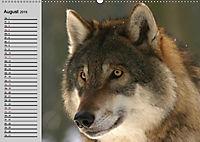 Wölfe. Verwegene Anmut (Wandkalender 2019 DIN A2 quer) - Produktdetailbild 8