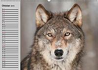 Wölfe. Verwegene Anmut (Wandkalender 2019 DIN A2 quer) - Produktdetailbild 10