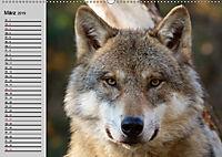 Wölfe. Verwegene Anmut (Wandkalender 2019 DIN A2 quer) - Produktdetailbild 3