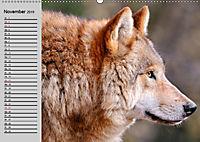 Wölfe. Verwegene Anmut (Wandkalender 2019 DIN A2 quer) - Produktdetailbild 11