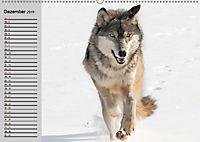 Wölfe. Verwegene Anmut (Wandkalender 2019 DIN A2 quer) - Produktdetailbild 12