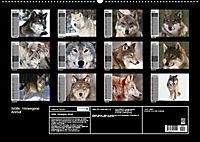 Wölfe. Verwegene Anmut (Wandkalender 2019 DIN A2 quer) - Produktdetailbild 13