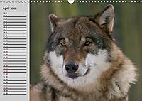 Wölfe. Verwegene Anmut (Wandkalender 2019 DIN A3 quer) - Produktdetailbild 4